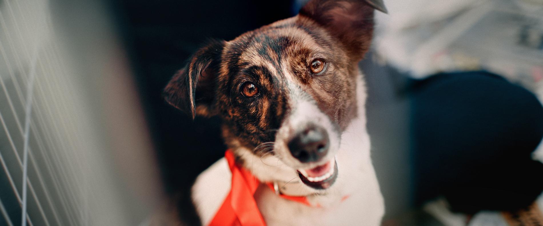 PROCESO CREATIVO es una Agencia Pet Friendly